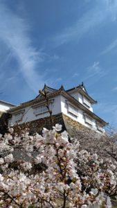 桜の季節 Vol.2